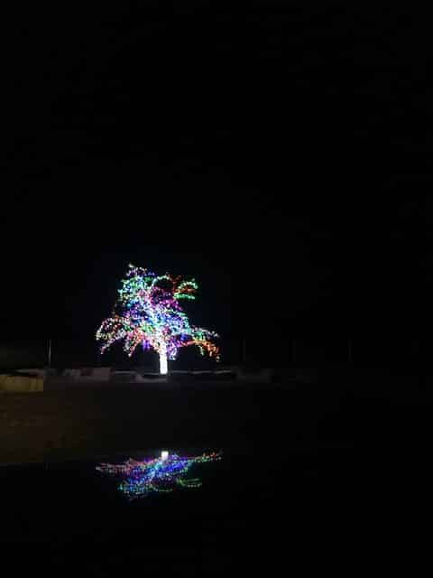 stressed-out-enjoy-holidays-lees-summit-magic-tree