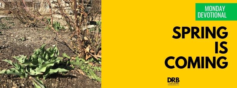 Devo Blog Header - Spring series - Spring is Coming