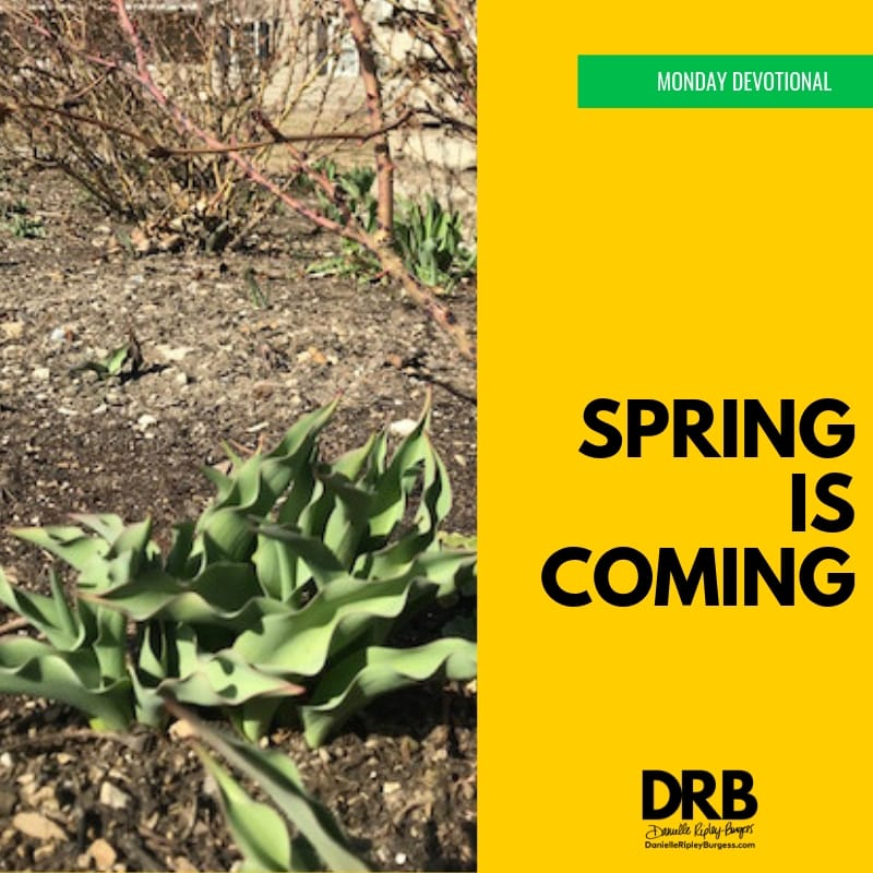 Devo Image - Spring series - Spring is Coming