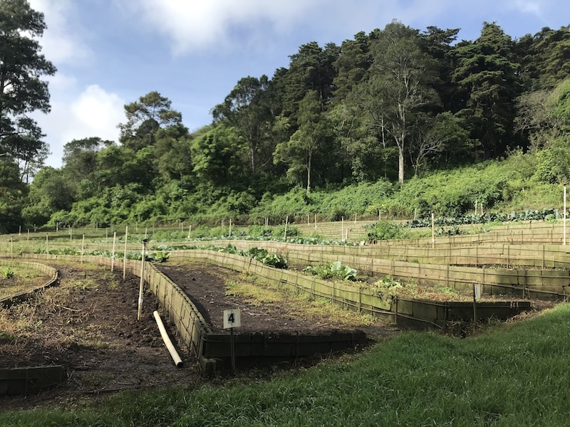 Guatemala-garden