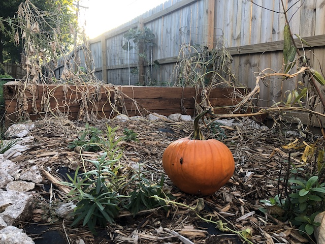 surprise-pumpkin-garden